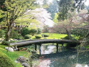 Image of Nitobe Memorial Garden bridge and pond surrounded by cherry blossoms