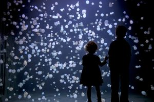 Children watching jellyfish at Vancouver Aquarium